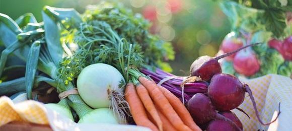 Potpora za sudjelovanje poljoprivrednika u sustavima kvalitete (3.1.1.)