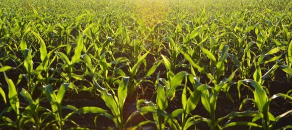 LAG natječaji: Povećanje dodane vrijednosti poljoprivrednim proizvodima