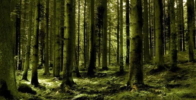 Šumski istraživači